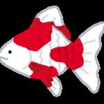 金魚 イラスト